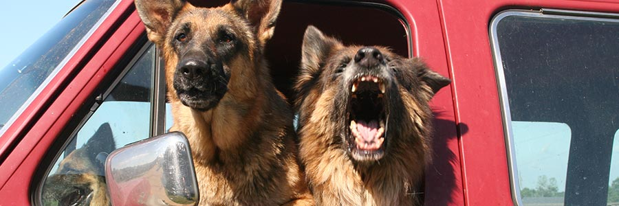 two protection gurad dogs in vehicle